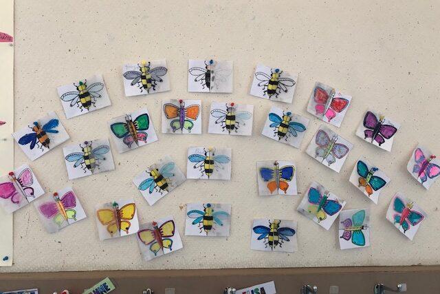 Symétrie insectes